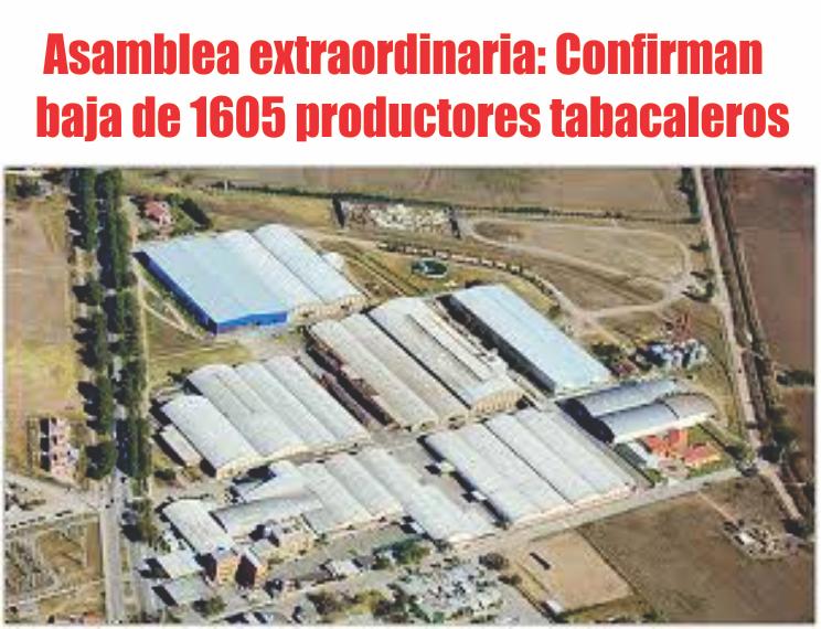 Confirman baja de 1605 productores tabacaleros