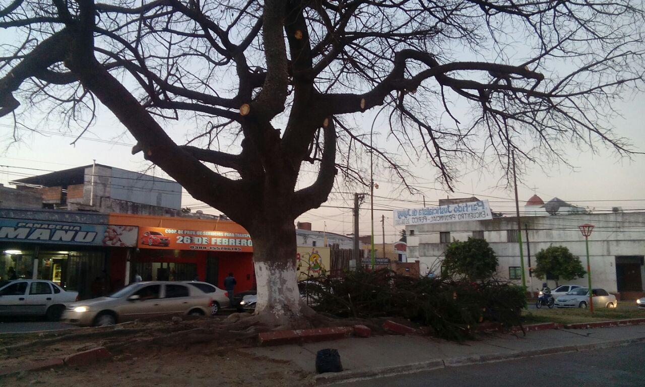 Poda de 130 árboles en Santo Domingo y Avda. San Martín