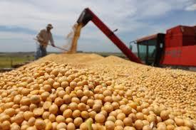 El Gobierno anunció que pagará $323,5 por tonelada de soja a productores del NEA-NOA