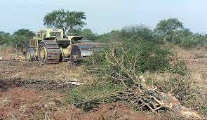 En seis meses se desmontaron en el NEA-NOA, 47.000 hectáreas de bosques nativos