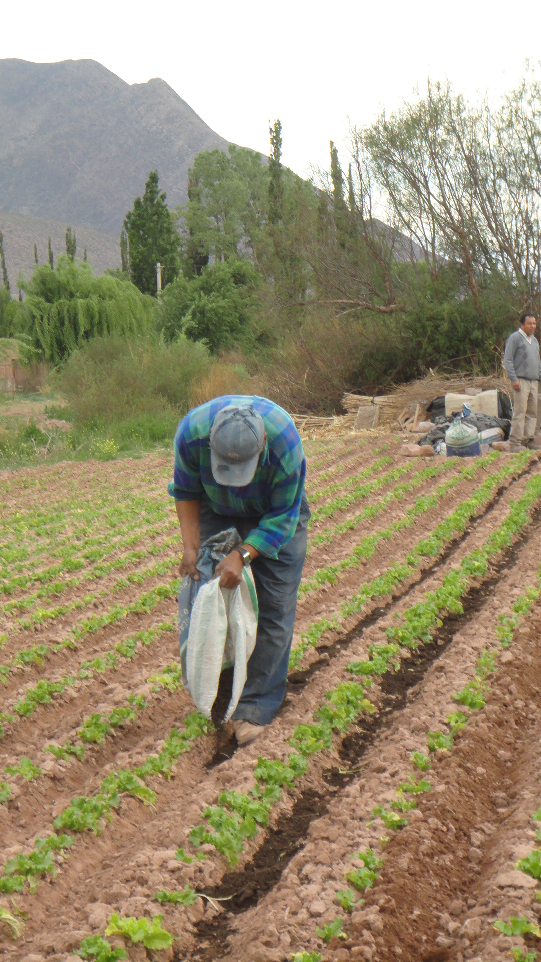 Mejoran la fertilidad de los suelos de la quebrada  de Humahuaca