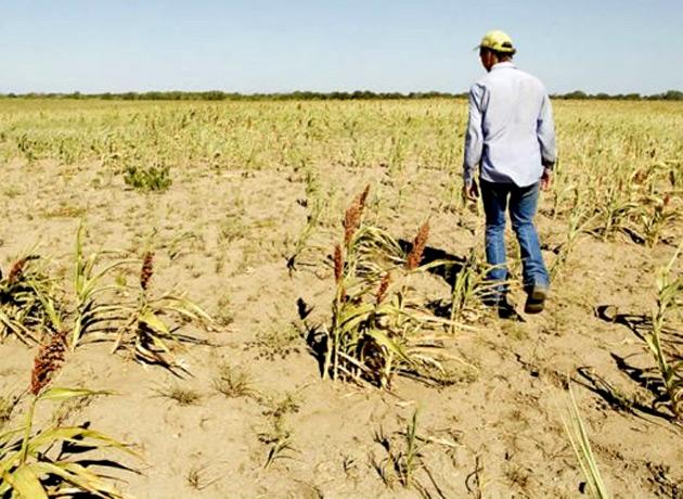 Más economistas reducen su estimación de crecimiento por el impacto de la sequía en el campo