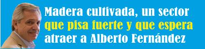 Madera cultivada, un sector que pisa fuerte y que espera atraer a Alberto Fernández