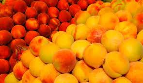 Avanzan en el mejoramiento genético de duraznos y nectarinas