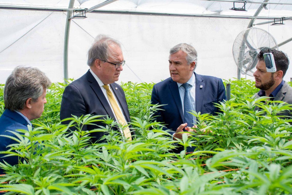 Interés alemán por proyecto de Cannabis Medicinal