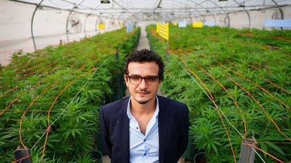 Argentina y Brasil acordaron impulsar la producción y comercialización del cannabis