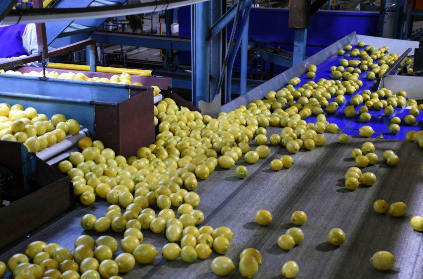 Ledesma busca triplicar la exportación de limones jujeños a USA