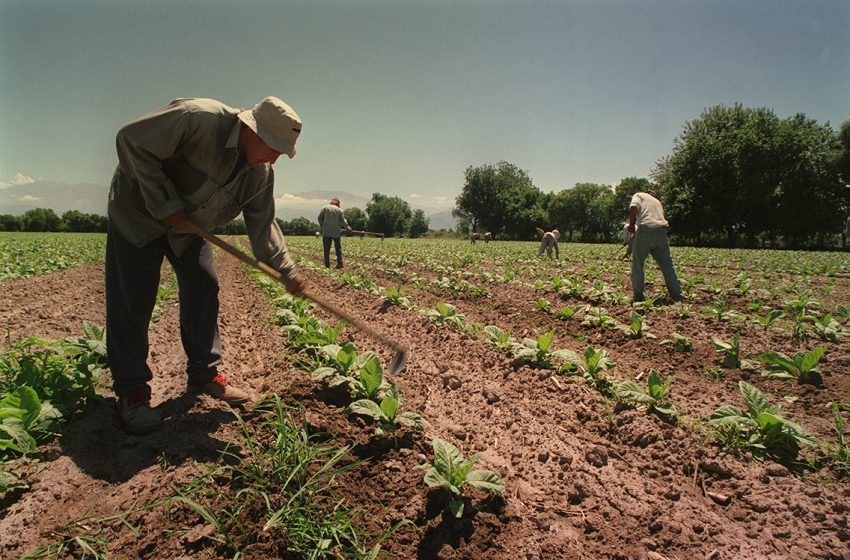 El RENATRE prorrogó el Plan de Facilidades de Pago para empleadores rurales