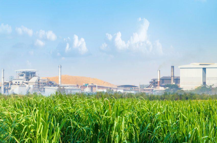 Cañeros no producirán alcohol si no aprueban la ley de biocombustibles